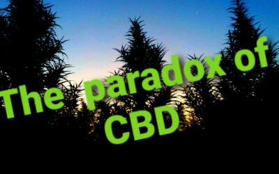 The Paradox of CBD